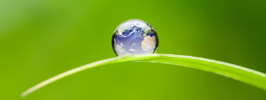 globe waterdrop on leaf